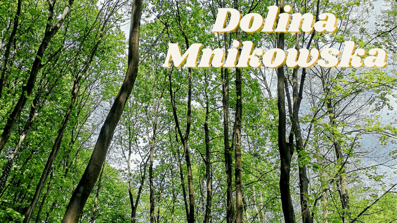Dolina Mnikowska zielone miejsce pod Krakowem