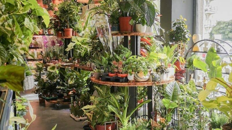 Rośliny w Krakowie. Gdzie kupić najpiękniejsze?