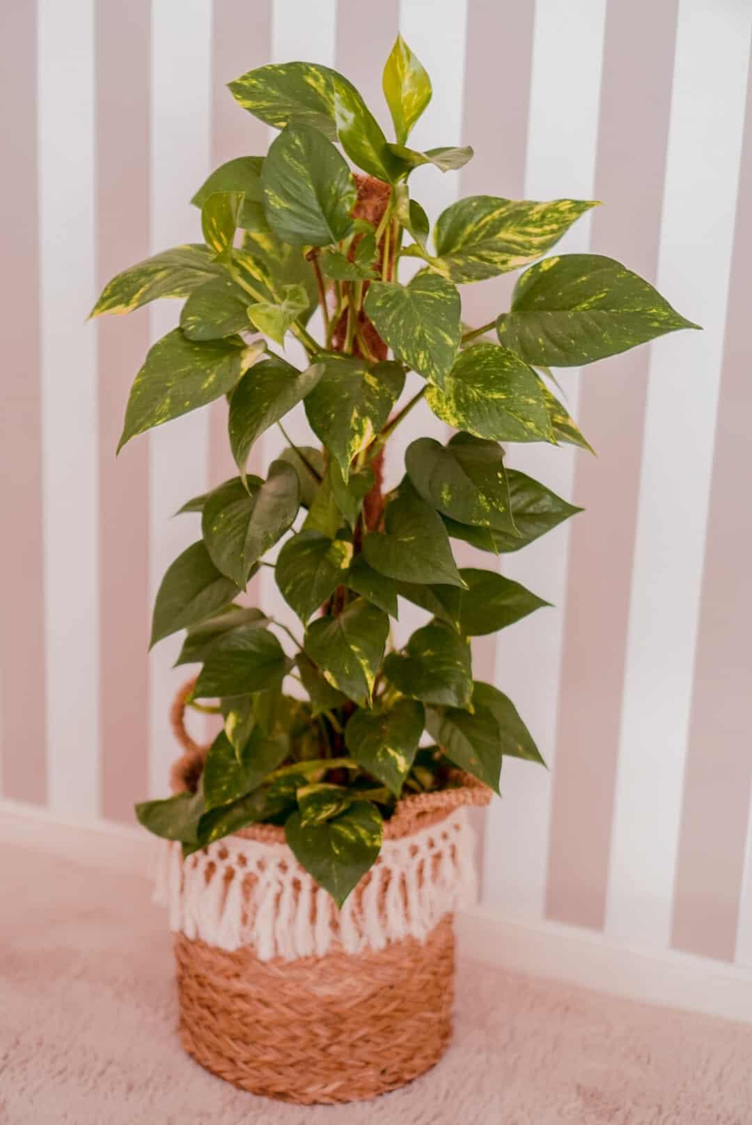 rosliny-dla-poczatkujacych