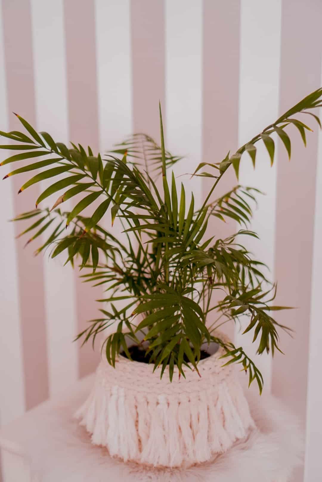 rośliny-dla-początkujących